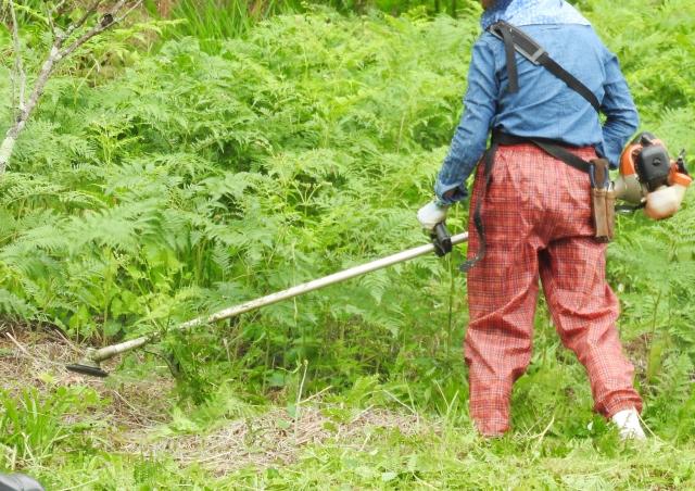 揖斐川町で草刈りにかかる料金相場は?追加料金や業者選びのコツまで解説