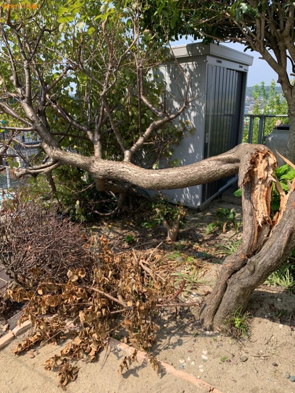 梅の木の伐採・回収ご依頼 お客様の声